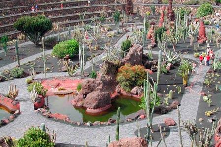 jardin cactus
